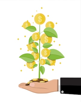 De boom van het geldmuntstuk ter beschikking van zakenman