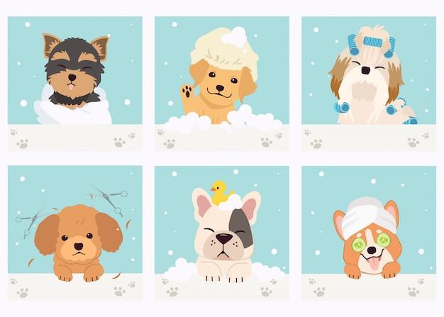 De collectie van schattige hond met spa en salon thema in platte vector stijl