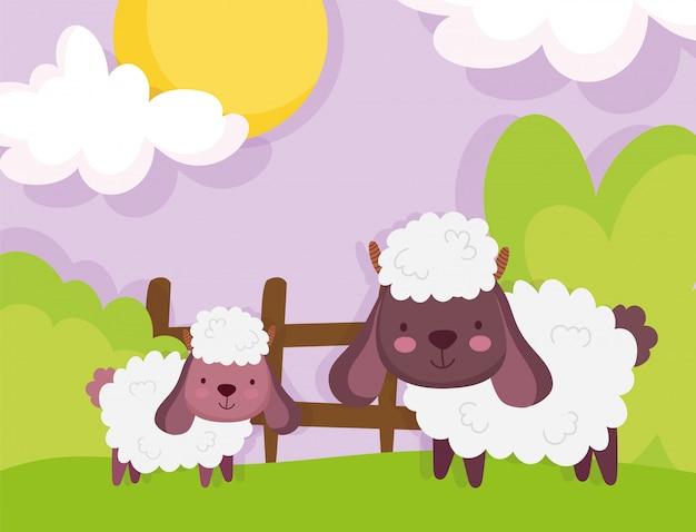 De dieren van het de hemellandbouwbedrijf van het schapen houten omheining gras