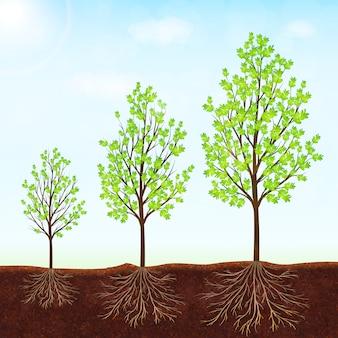 De groei van de boom vectorachtergrond