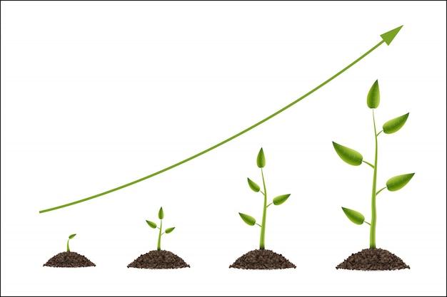 De groei van groene boom met blad