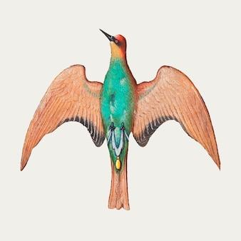 De groene vintage illustratie van de spechtvogel Gratis Vector