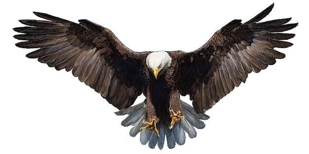 De kale adelaar landende hand trekt en schildert op witte achtergrond.