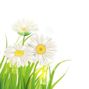 De lentemadeliefjes op vers groen gras