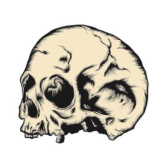 De menselijke schedel geïsoleerd op een witte achtergrond