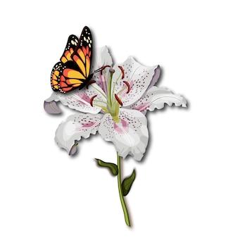 De monarchzitting van de vlinder op de witte leliebloem