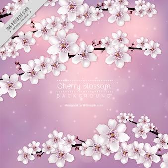 De roze achtergrond van de kersenbloesem