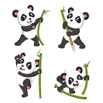 De schattige verzameling panda palying met de groene bamboe