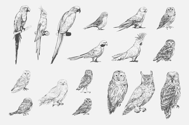 De stijl van de illustratietekening van de inzameling van papegaaivogels