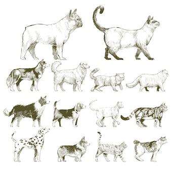 De stijl van de illustratietekening van diereninzameling