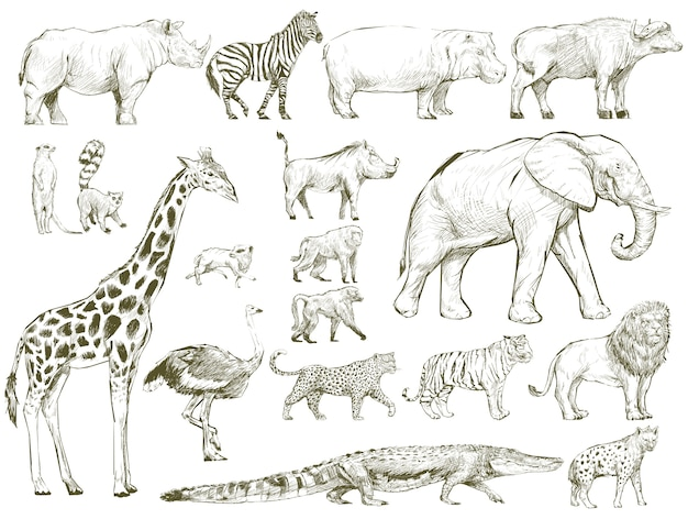 De stijl van de illustratietekening van het wildinzameling