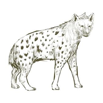 De stijl van de illustratietekening van hyena