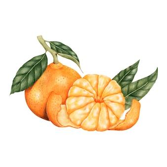 De stijl van de illustratietekening van sinaasappel