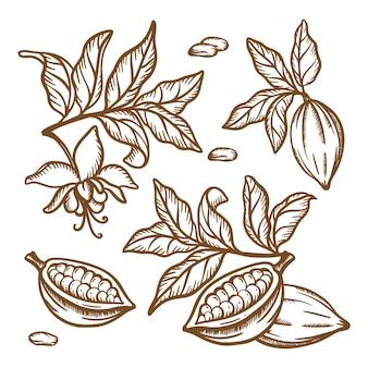 De takken van de cacaoboom. fruitzaden en bladeren van theobroma-boom. bruin zwart-wit ontwerp in vintage stijl. hand getrokken illustraties illustratie set