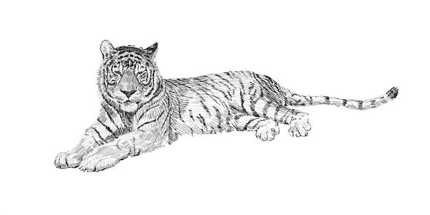 De tijger liegt