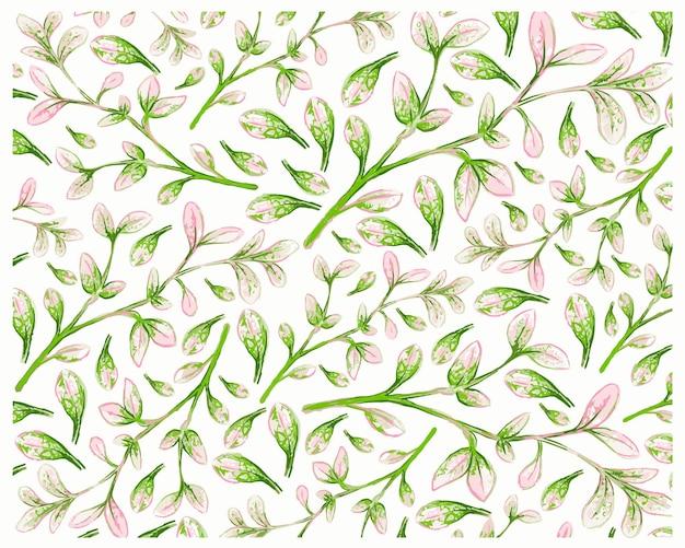 De verse tamarinde van manilla die op wit wordt geïsoleerd
