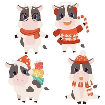 De verzameling schattige koe met kerstkostuum in vlakke stijl. grafische bron over kerstmis en vakantie voor achtergrond, afbeelding, inhoud, banner, stickerlabel en wenskaart.