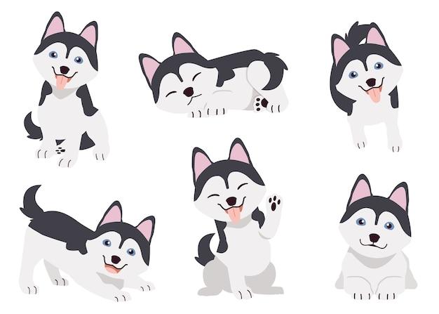 De verzameling shihtzu-honden in veel actie