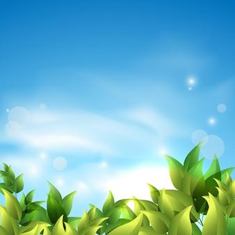 De zomerachtergrond met groene bladeren tegen de hemel.