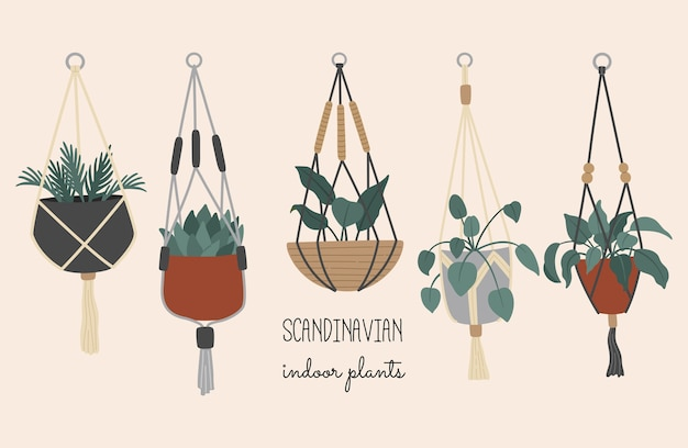Decoratieve kamerplanten in hangpotten, scandinavisch interieur