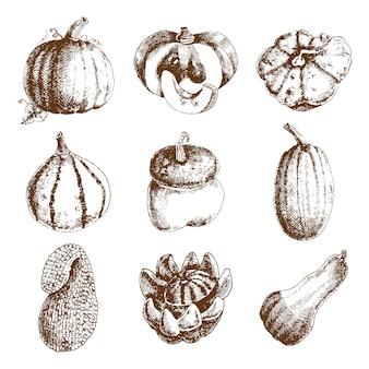 Decoratieve ongebruikelijke pompoenen variëteiten en winter squash iconen collectie
