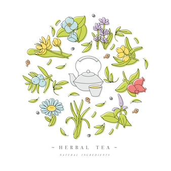 Decorontwerp kleurrijke sjablonen logo en emblemen - biologische kruiden en thee