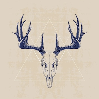 Deer schedel