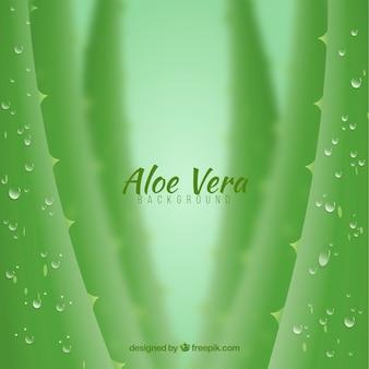 Defocused achtergrond van aloë vera