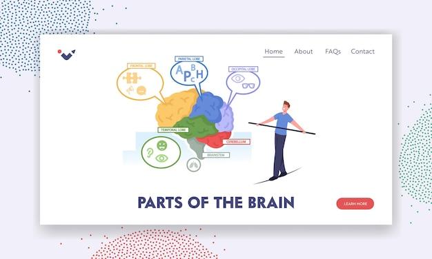 Delen van de brain landing page-sjabloon. klein mannelijk personage balancerend op touw bij enorme menselijke hersenanatomie gescheiden op kleurrijke delen frontale, pariëtale lobben. cartoon mensen vectorillustratie