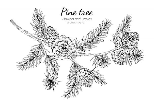 Dennenappels en blad tekening illustratie met lijntekeningen op witte achtergrond.