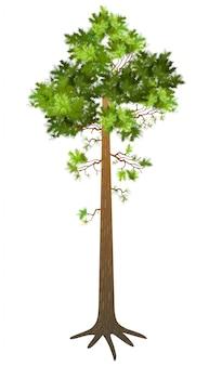 Dennenboom.