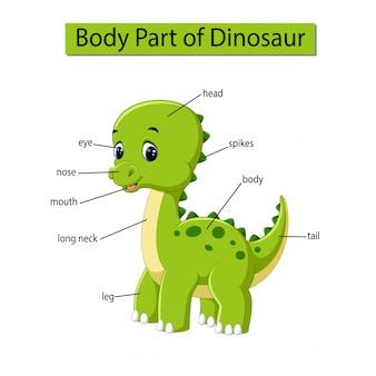 Diagram dat lichaamsdeel van dinosaurus toont