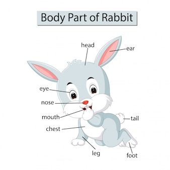 Diagram dat lichaamsdeel van konijn toont
