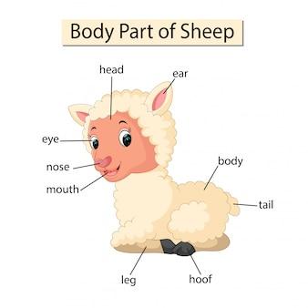 Diagram dat lichaamsdeel van schapen toont