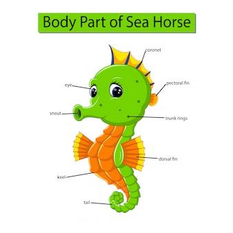 Diagram dat lichaamsdeel van zeepaardje toont