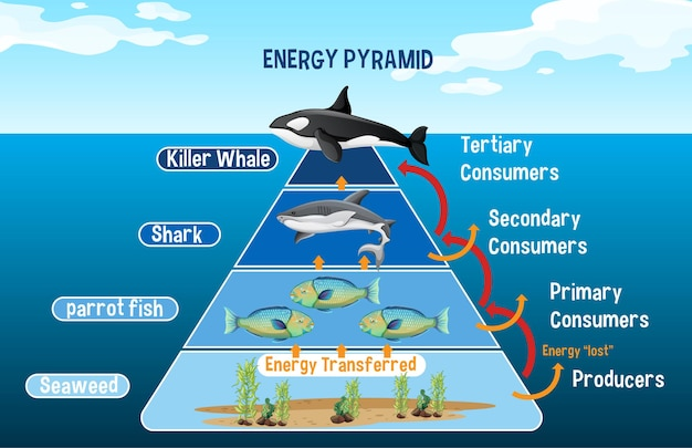 Diagram met arctische energiepiramide voor onderwijs