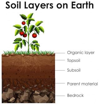 Diagram met bodemlagen op aarde