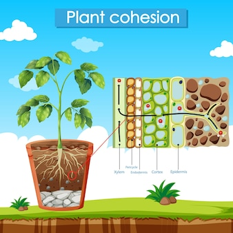 Diagram met plantencohesie