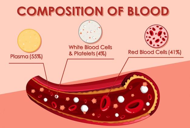 Diagram met samenstelling van bloed