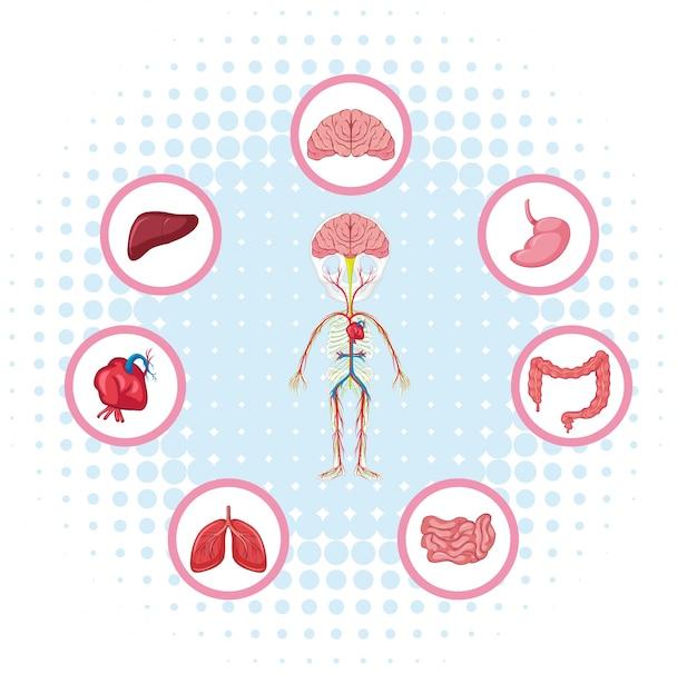 Diagram met verschillende delen van het lichaam