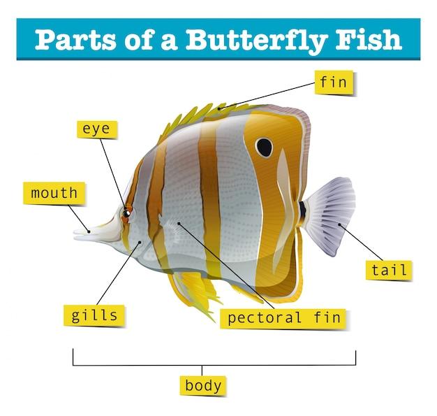 Diagram van verschillende delen van vis
