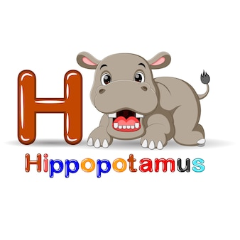Dieren alfabet: h is voor hippo
