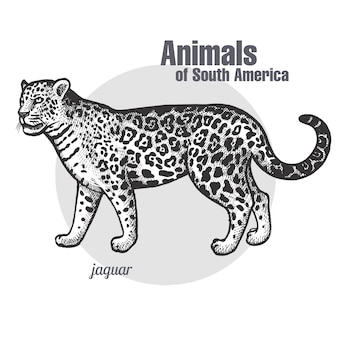 Dieren van zuid-amerika jaguar.