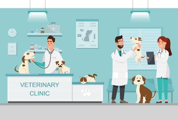 Dierenarts en arts met hond en kat op teller in dierenartskliniek