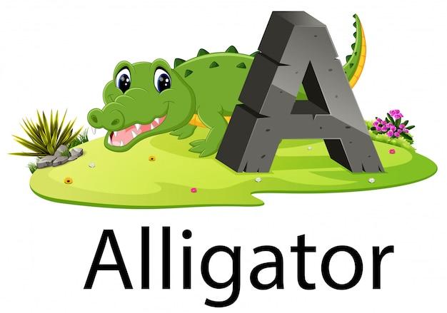 Dierentui alfabet a voor alligator met het dier naast