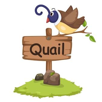 Dierlijke alfabet letter q voor kwartel