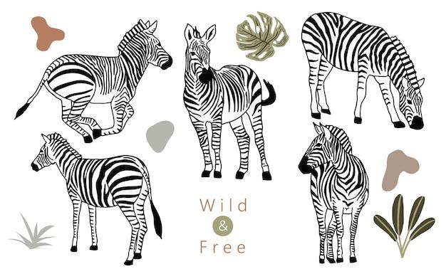 Dierlijke objectverzameling met zebra. vectorillustratie voor pictogram, sticker, afdrukbaar