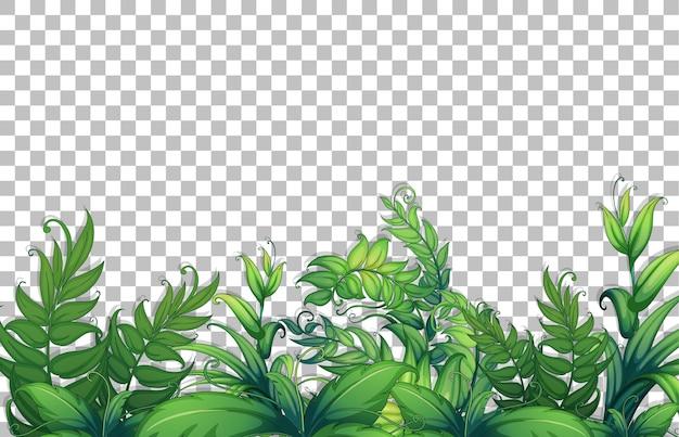 Diverse tropische bladeren op transparante achtergrond