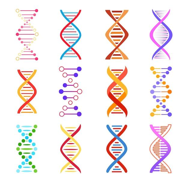Dna-helixpictogrammen, genetische geneeskunde vectortekens. spiraalvormige molecuulstructuur, wetenschap en wetenschappelijk onderzoek, kleurrijke dna-ontwerpelementen, menselijke gencode-evolutiesymbolen geïsoleerd op een witte achtergrond