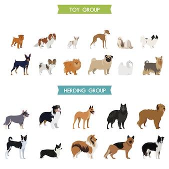 Dog collectie ontwerp